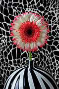 Chrysanthemums  Posters - Daisy and graphic vase Poster by Garry Gay