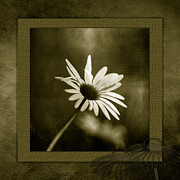 Photo Mixed Media - Daisy by Bonnie Bruno