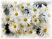 Daisy Art - Daisy Bouquet by Carol Sweetwood