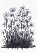 Daisy Drawings - Daisy Bush by Di Fernandes
