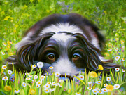 Denise Laurent - Daisy Daisy - Spaniel...