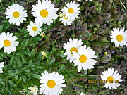 Daisies Pyrography Prints - Daisy Daisy Give Me Your Answer Do Print by Sarah Gayle Carter