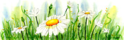 Watercolor Painting Prints - Daisy Field Print by Ann Troe