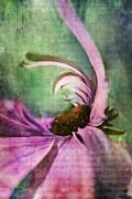 "\""textured Floral\\\"" Prints - Daisy Fun - a01v042t05 Print by Variance Collections"