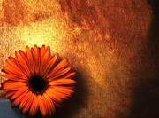 Burnt Digital Art - Daisy in a Corner by Marsha Heiken