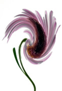 Floral Digital Art Originals - Daisy In A Twirl by Terence Davis