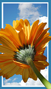 Floral Posters - Daisy in the Sky Poster by Rozalia Toth