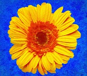Yellow Flower Framed Prints - Daisy Framed Print by Jeff Kolker