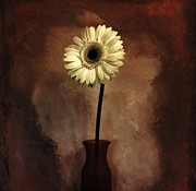 Floral Still Life Prints - Daisy Shines in the Dark Print by Marsha Heiken