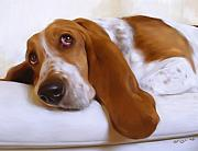 Basset Hound Framed Prints - Daisy Framed Print by Simon Sturge