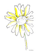 Daisy Drawings - Daisy Watercolor Painting 1 by Gordon Punt