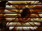 Gerber Daisy Art - Daisy with Blinds Shut by Marsha Heiken