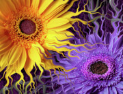 Floral Art Photos - Daisy Yin Daisy Yang by Christopher Beikmann