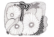 Daisies Drawings Prints - Daisy Zentangle Print by Lou Belcher