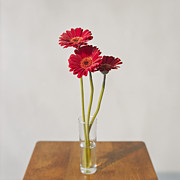 Y120817 Prints - Daisys On Table Print by Daniel J. Grenier