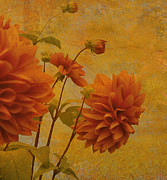 Orange Flower Digital Art Framed Prints - Dalias in Orange and Yellow Framed Print by Jeff Burgess