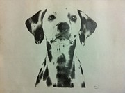 Cute Mixed Media Originals - Dalmatian by Abhijit Tagade