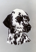 Hall Pastels - Dalmatian by Patricia Ivy