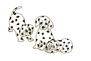 Puppies Drawings Framed Prints - Dalmatian Puppies Framed Print by Rachel Lowry