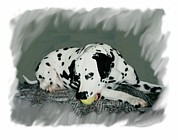 Dalmation Digital Art Posters - Dalmation 270 Poster by Larry Matthews