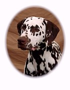 Dalmation Digital Art Posters - Dalmation 735 Poster by Larry Matthews