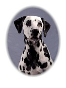Dalmation Digital Art Posters - Dalmation 895 Poster by Larry Matthews