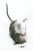Mice Digital Art Prints - Damn Print by Jan Piller
