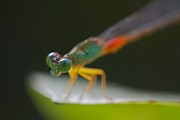 Damsel Fly Photos - Damsel fly by Gary Bridger