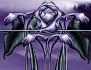 Calla Lily Posters - Dance Of The Purple Calla Lilies V Poster by Zeana Romanovna