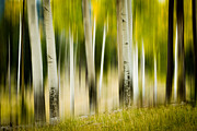 Artist With Camera Prints - Dancing Aspens Print by Joye Ardyn Durham