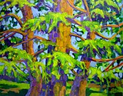 Cedars Paintings - Dancing Cedars by Jane  Francis