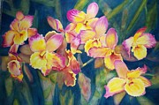 Cattleyas Prints - Dancing Dendrobiums Print by Phyllis Bleau