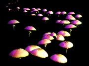 Toadstools Metal Prints - Dancing in the Dark Metal Print by John Foote