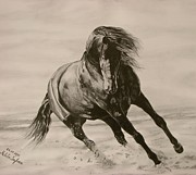 Wild Pony Drawings Prints - Dancing pace Print by Melita Safran