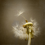 Dandelion Clock Print by Ian Barber