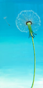 Featured Painting Metal Prints - Dandelion Metal Print by David Junod