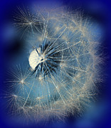 Avantgarde Prints - Dandelion Dream Print by Susanne Van Hulst