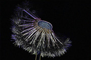 Modified Photos - Dandelion by Heiko Koehrer-Wagner