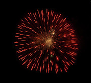 4th July Photos - Dandelion on Fire by Vijay Sharon Govender