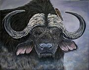 Cape Buffalo Paintings - Danger in the Dust - Cape Buffalo by Avril Brand