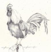 Barn Yard Drawings Prints - Dangerous Print by Deborah Wetschensky