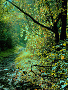 Fall Landscape Print Framed Prints - Dappled Path I Framed Print by Steven Ainsworth