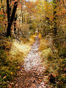 Fall Landscape Print Framed Prints - Dappled Path II Framed Print by Steven Ainsworth