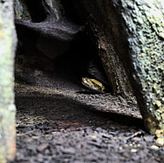 Rattlesnake Photos - Dark and Dangerous Places by JC Findley