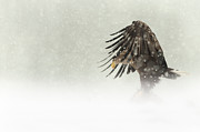 Snow Digital Art - Dark Angel by Andy Astbury