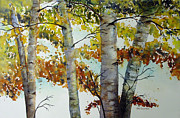 Birch Prints - Dark Birch Delight Print by Dee Carpenter