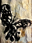 Amy Bradley - Dark Butterfly with Gray...