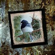 Frame Originals - Dark-eyed Junco by Al  Mueller