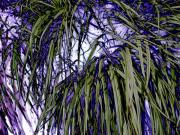 Altered Photograph Photos - Dark Green and Purple Grass by Beth Akerman