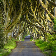 Dark Hedges Posters - Dark Hedges 1 Poster by Jack Daulton